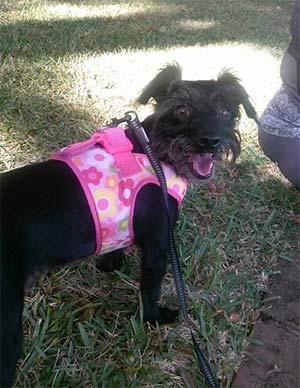 Lulue the Poodle mix, Samantha Butler - East Cooper's Favorite Pets