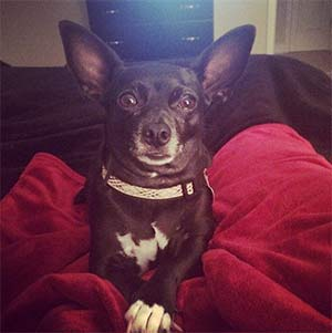 Olive the Chihuahua, Haley Carter