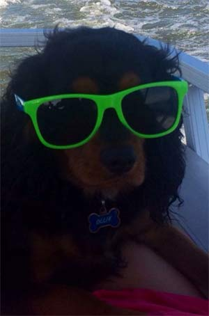 Ollie the King Charles Cavalier, Kelly Antonevich - East Cooper Pets