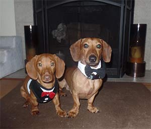 Razzy and Toby the Dachshunds, Elin and Russell Philpot