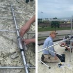 Fort Moultrie Tower Part of International Research Collaboration : 'Bird is the word'