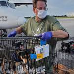 Charleston Animal Society is Leading the Way for a No Kill State