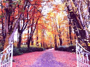Autumn by Lori Strang
