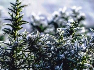Winter Wonderland by Lori Strang