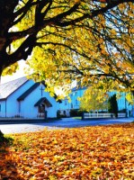 Autumn by Dan Phelan