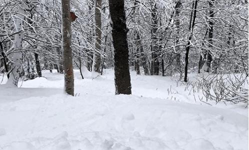 Social media posts from Mount Snow