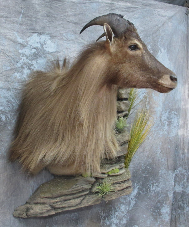 Game Heads  Mounts Unlimited Taxidermy