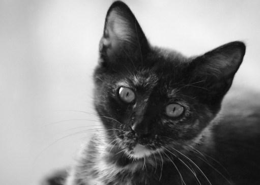Black & White - Animals