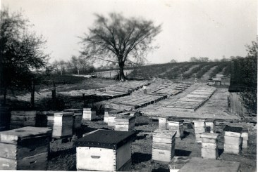 Beehives at the Scott Orchard