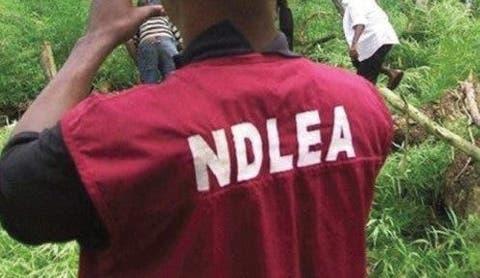 NDLEA arrests 37 suspected drug peddlers in Oyo