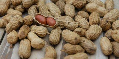 Allaitement et allergies alimentaires : des recommandations à l'étape de la petite enfance