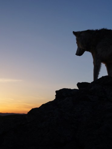 """Jean-Jacques Annaud's """"Wolf Totem"""""""