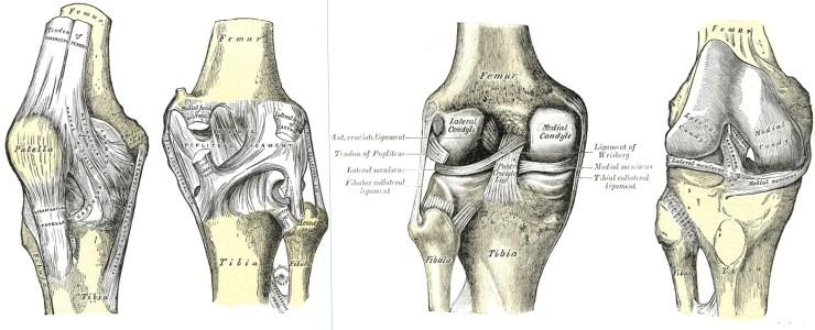 tendonsligamentscomplete