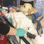 Companion dog Kanue comforts Jacob as he recovers from surgery.