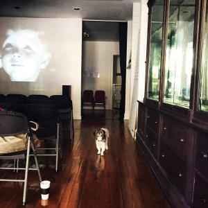 Dotti, Jacqueline Wood's Shih Tzu, in the cimema