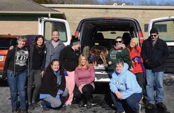 Board members, staff and volunteers from rescue partner The League for Animal Welfare moving animals to be fostered