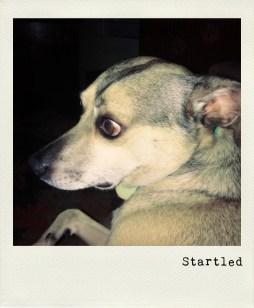 Startled