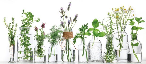 plants in clear glass