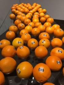 Kristen Neville Taylor - How Food Moves - Rowan University Art Gallery