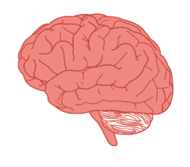 1174-brain-in-profile-vector.html