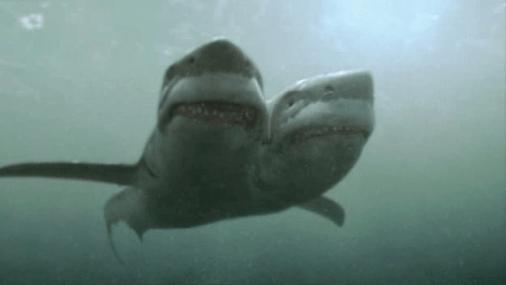 2 headed shark attack 3