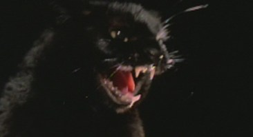 black-cat-lucio-fulci-1981