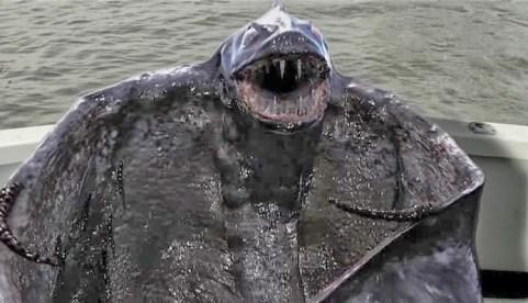 beast of the bering sea_beast