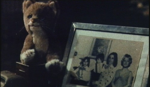 cat's victims