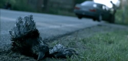 virus-undead-2008-dead-bird