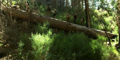 feral-2016-horror-movie-tree-trunk