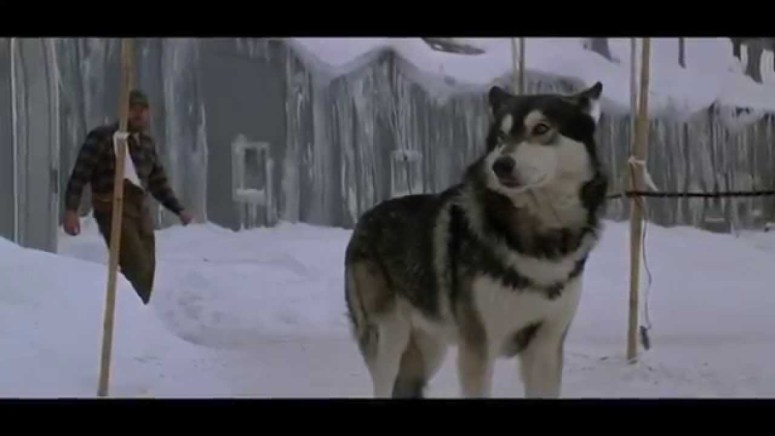 the thing husky