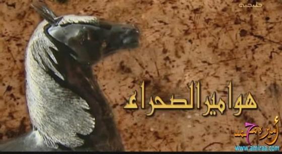 Movies Q8 هوامير الصحراء الجزء الاول