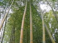 Bamboo - Te Pune