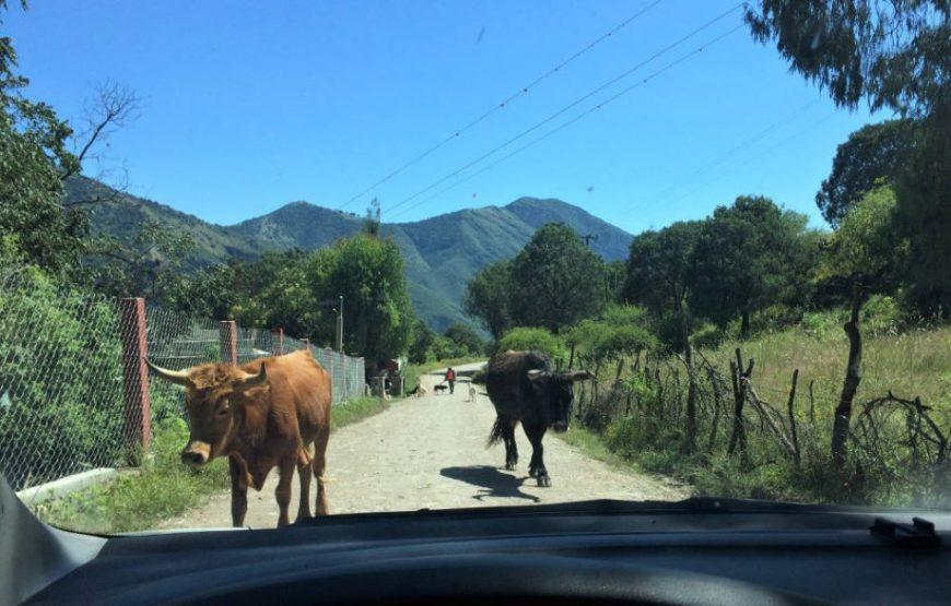Weg zum Casita Ecológica in der Nähe von Jalpan