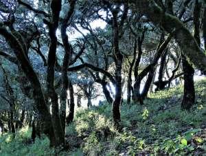 Wald um den View Point Quatro Palos in der Sierra Gorda