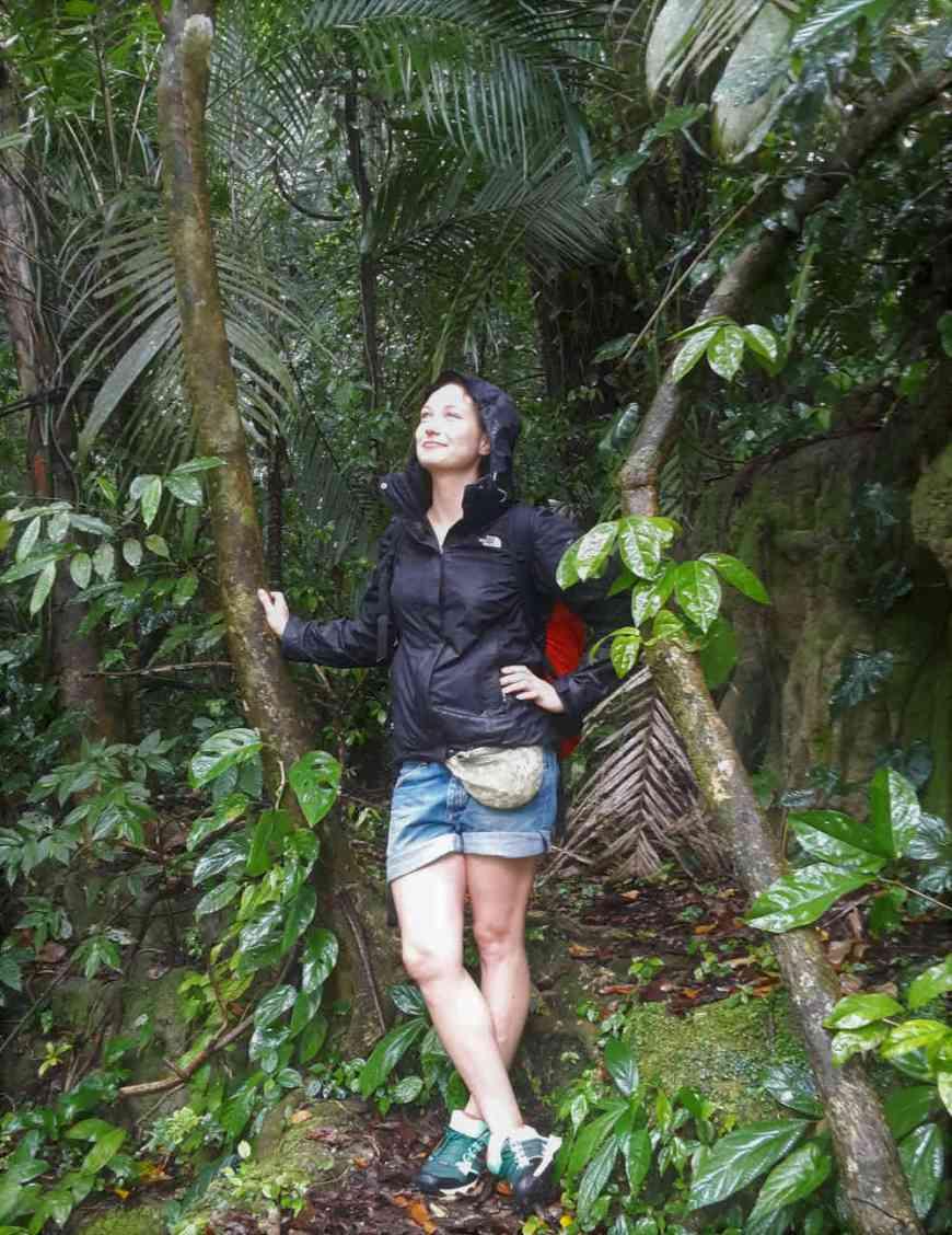 Regenwald Chiapas