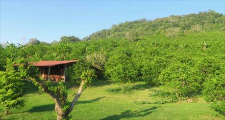 Orangenfeld in Veracruz