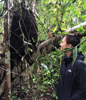 Xanath Termitennest web - Veracruz - Auf den Spuren der Vanille in Papantla