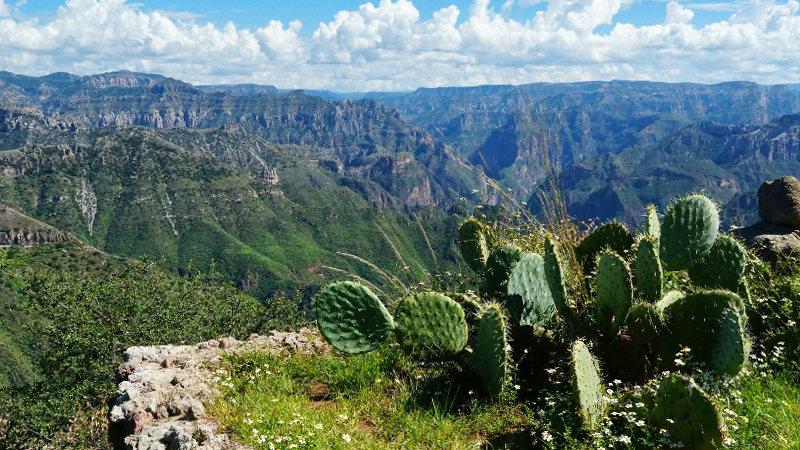 Landschaft Kaktus - Mit dem Zug durch den Kupfer Canyon - Gastbeitrag