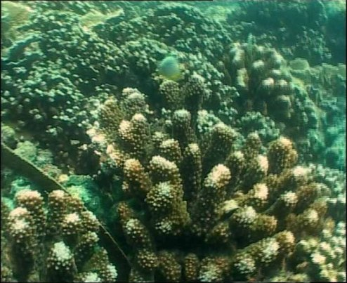 coral-bleaching-a-major-concern.jpg