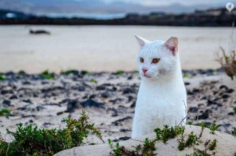 Fuerteventura - mein kleiner Freund von El Cotillo