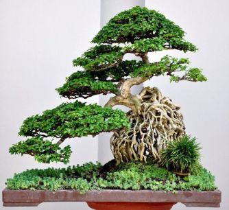 La tendance côté jardin ? Le bonsaï !