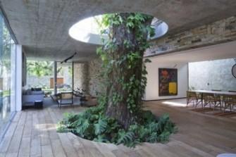 Une belle maison au Brésil, construite autour d'un manguier