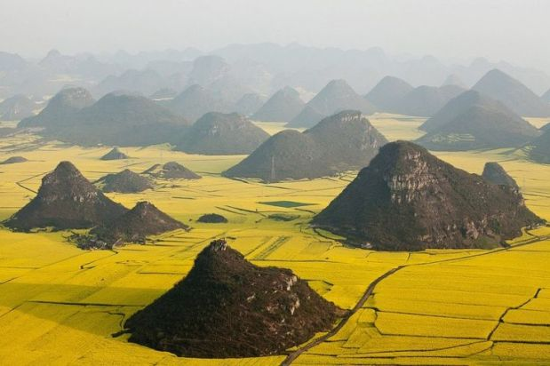 Champs de fleurs de colza, Yunnan, Chine 2