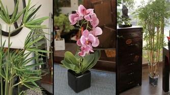 Optez pour des plantes qui durent éternellement !