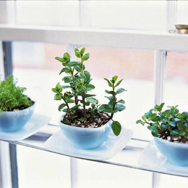 Cultiver des herbes aromatiques chez soi 09