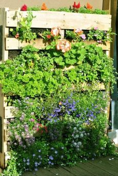 Nouvelle tendance, le jardin vertical 20