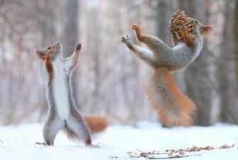 Le photographe Vadim Trunov capture des écureuils en train de jouer