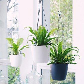 Quelles plantes pour suspension choisir ?