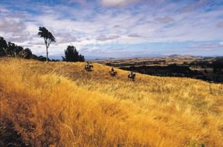 Huka-Lodge-Horseriding-1024x676